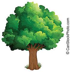 um, árvore, em, a, floresta