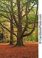 um, árvore grande, parque, outono, time.