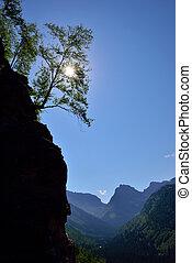 um, árvore, ligado, a, rocha, com, um, brilhar sol, através, aquilo
