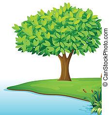 um, árvore, perto, a, corpo água