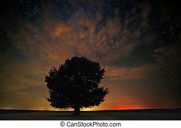 um, único, árvore, em, um, campo, com, bonito, espaço, fundo
