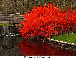 um, ajardinar, paisagem, em, jardim botanic