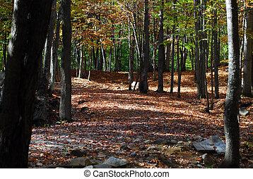 um, autumn\\\'s, paisagem