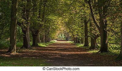 um, avenida, de, árvores