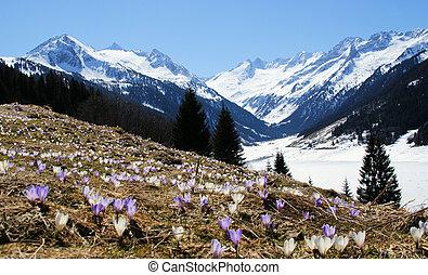 um, bonito, paisagem montanha, com, um, flor, prado, em, a, primeiro plano.