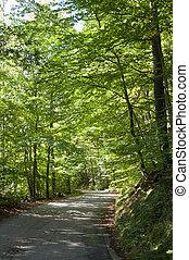 um, caminho, através, a, floresta