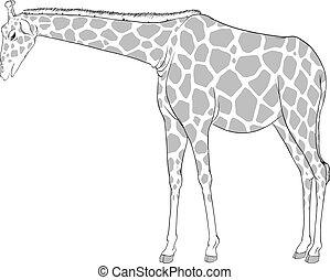 um esboço, de, um, girafa