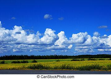 um, finlandês, paisagem
