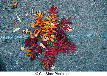 um, folha caída, ligado, a, pavimento