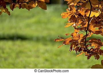 um, folha, em, a, outono