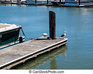 um, gaivota, em, um, marina, em, são francisco, califórnia, eua