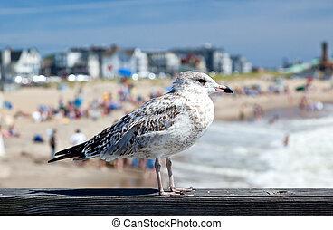 um, gaivota, praia, em, bosque oceano