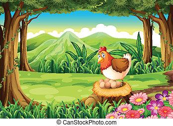 um, galinha, colocando ovos, em, a, floresta