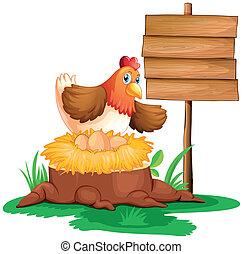 um, galinha, colocando ovos