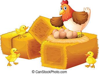um, galinha, com, dela, ovos, e, pintainhos