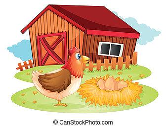 um, galinha, e, dela, ovos, em, a, quintal