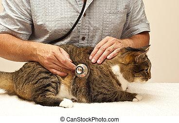 um, grande, tabby, em, a, veterinário
