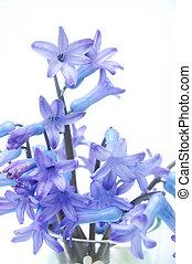 um, grupo flores