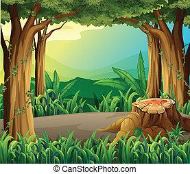 um, ilegal, acto derrubar árvores, em, a, floresta