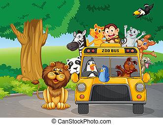 um, jardim zoológico, autocarro, cheio, de, animais