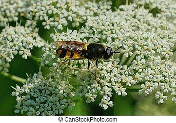 um, marrom, flor, abelha, listrado, senta-se, branca