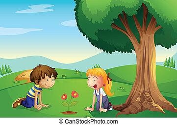 um, menina, e, um, menino, observar, a, planta, crescer