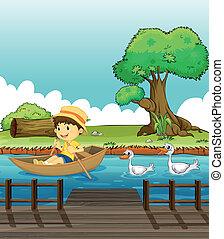 um, menino, montando, um barco, seguido, por, patos