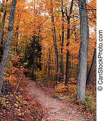 um, outono, rastro, passeio