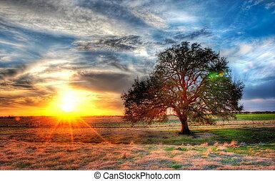 um, pôr do sol, ligado, um, texas, fazenda