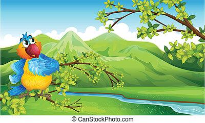 um, papagaio, frente, a, montanhas altas