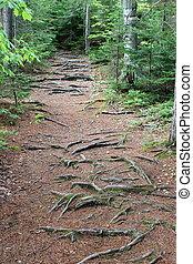 um, pineneedle, caminho, em, a, madeiras