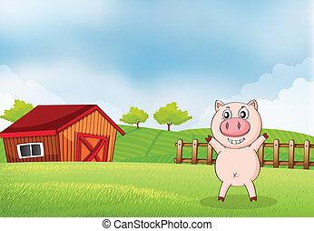 um, porca, em, a, fazenda, com, um, celeiro