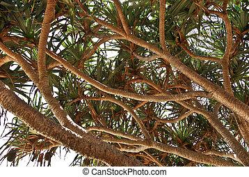 um, praia, árvore, em, austrália