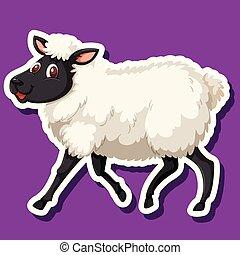 um, sheep, ligado, experiência roxa