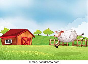 um, sheep, pular, frente, de, um, celeiro