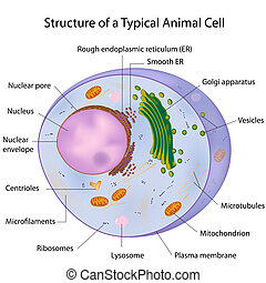 um, típico, célula, etiquetado, eps10