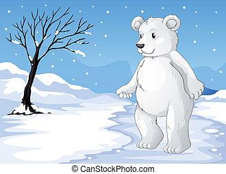 um, urso polar, congelação