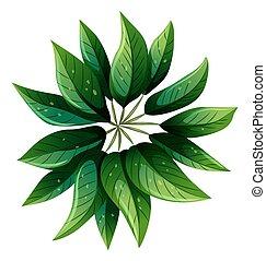 um, vista aérea, de, um, planta verde