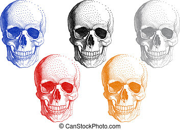 umano, crani, vettore, set