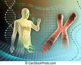 umano, cromosoma