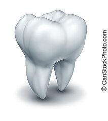 umano, dente