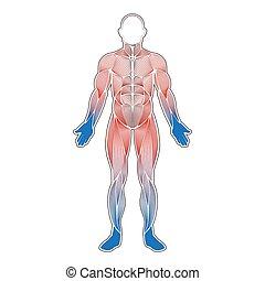 umano, muscoli, freddo