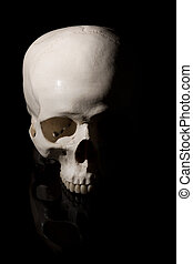 umano, nero, cranio, fondo