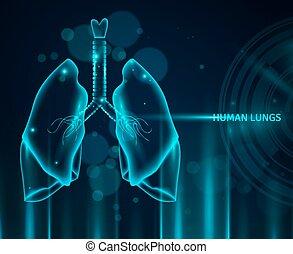 umano, polmoni, fondo