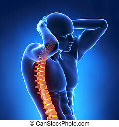 umano, raggi x, spina, vista frontale