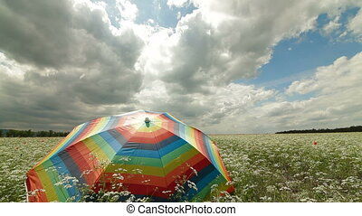 Colorful umbrella in a summer field