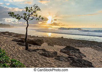 Umbrella Tree at Rocky Point on the North Shore of Oahu, Hawaii at sunset