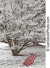 Umbrella under Snow Covered Tree