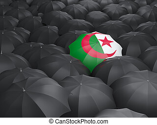 Umbrella with flag of algeria