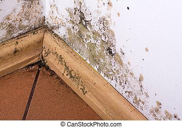 umidade, house., parede, molde, acúmulo, canto